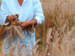 Праздник пшеницы  Неаполь