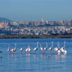 Кальяри, Италия: все о Кальяри