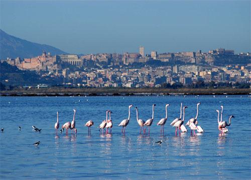 Cagliari-plamenak italia
