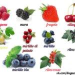 Итальянский словарь с транскрипцией — Ягоды